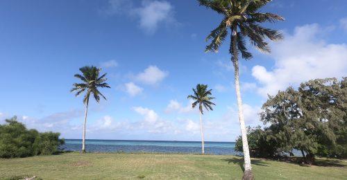 Ha'afeva palm trees
